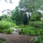 The pond and marsh area of the garden.