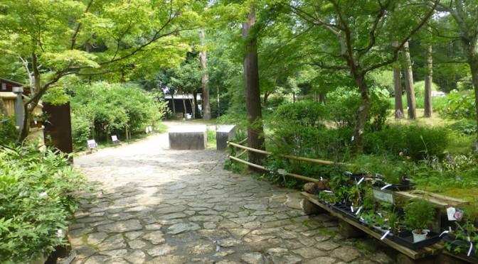 The path into Kasuga taisha man'yōshokubutsuen.